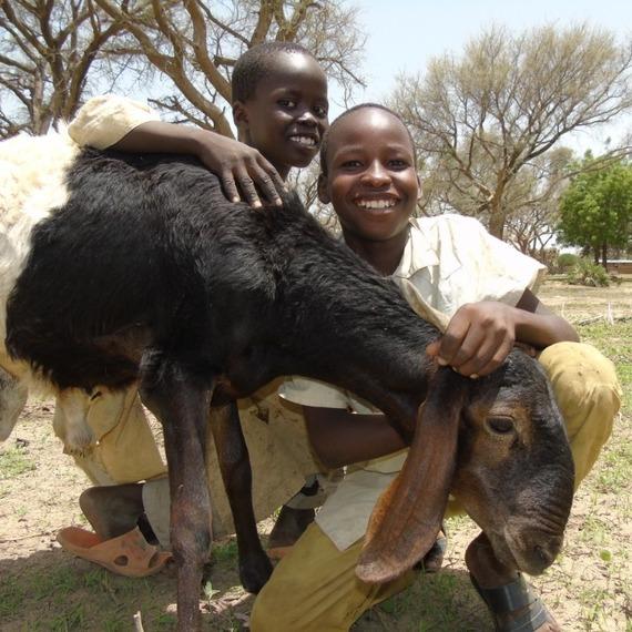 AÏD-AL-KEBIR, 97€ ET OFFREZ VOTRE MOUTON EN AFRIQUE